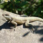 diferencia-entre-reptiles-y-anfibios