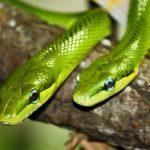 diferencia entre vibora y serpiente