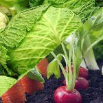 diferencia entre verdura y hortaliza