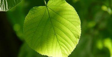 fotosintesis y respiracion