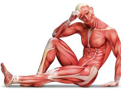 tejido y organo