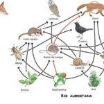 Cadena alimenticia y red trofica