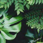 nastia y tropismo