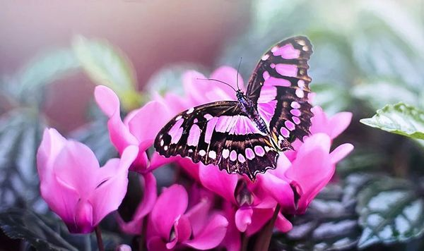 Mariposa rosa sobre flores