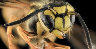 bichos e insectos