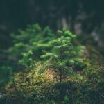 Contexto y entorno